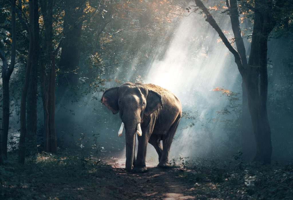 Four Sales Content ROI Stats and the Elephant in the Room
